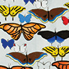 Butterflies of Colorado by Lindsey Wohlman