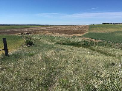 Prairie Ridge Natural Area landscape