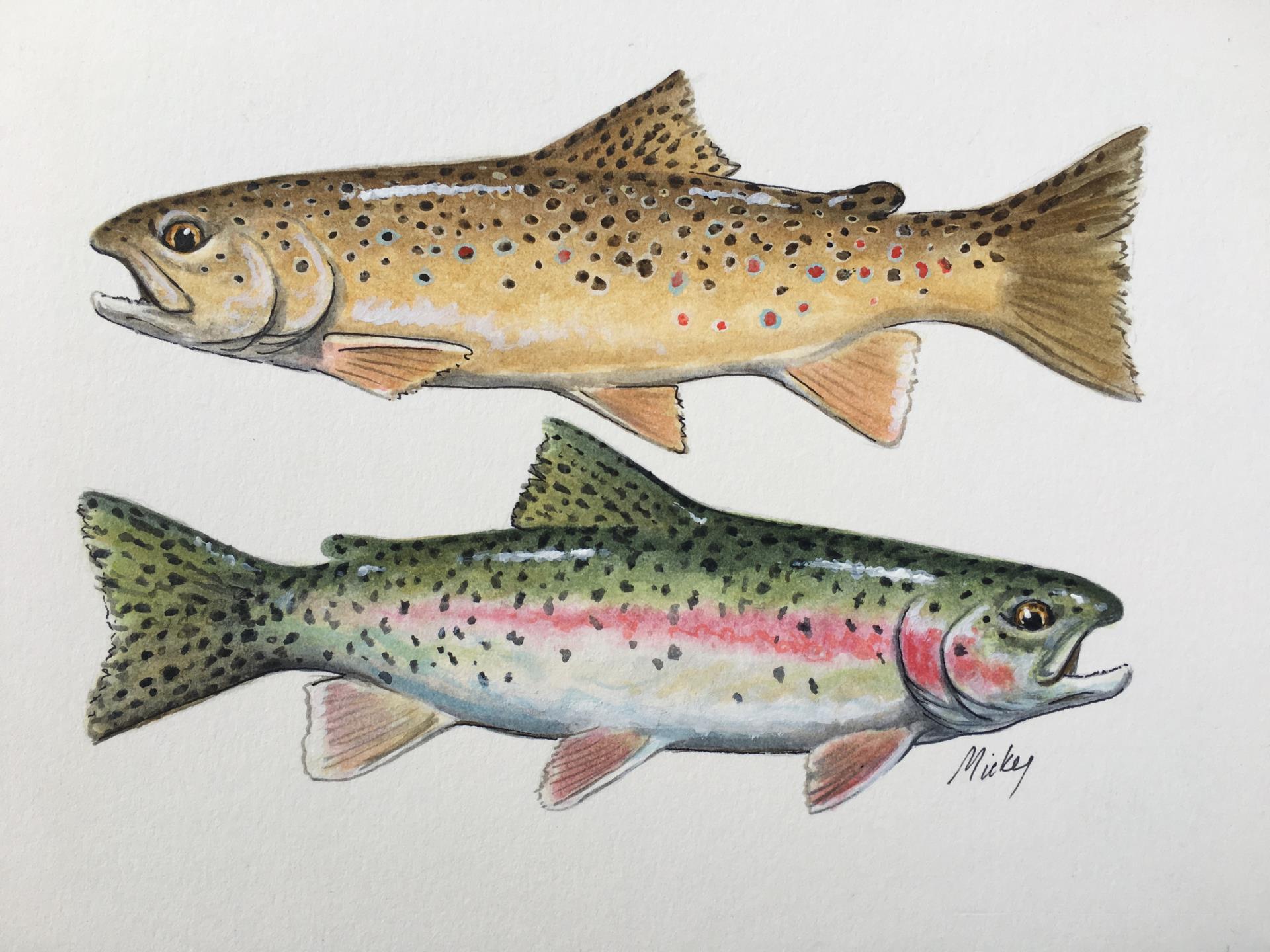 Fishing Reports | City of Loveland
