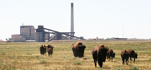 Platte River Power Authority and Bison