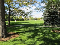 Osborn Park Fields